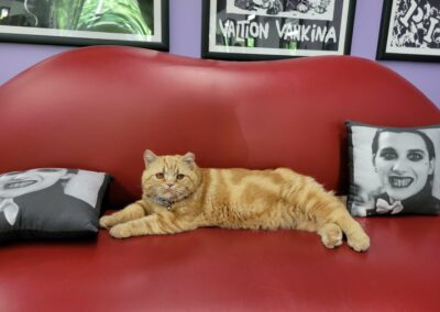 Orange cat laying on a couch.